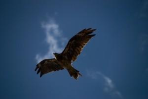 eagle足成
